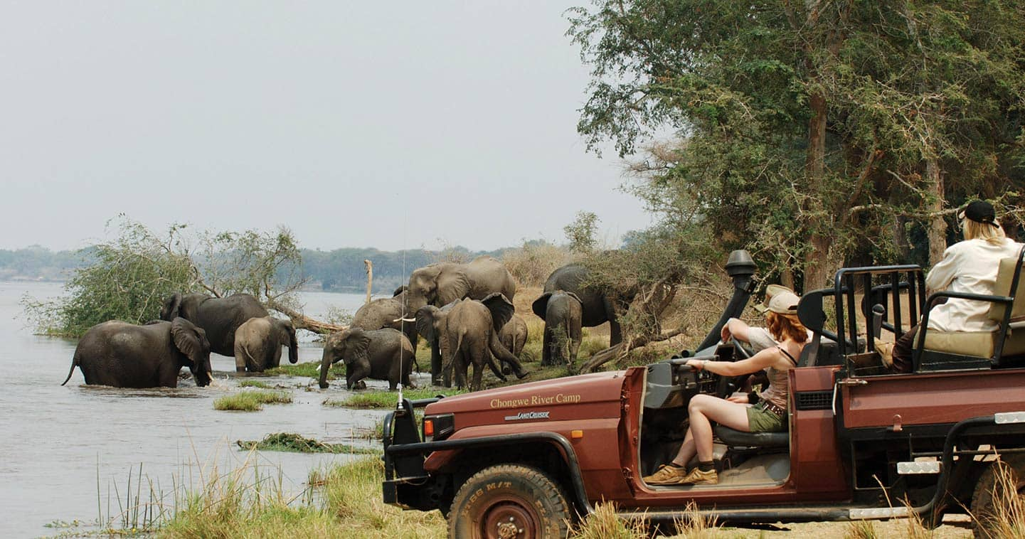 Enjoy a Safari Game Drive with Chongwe River Camp in the Lower Zambezi National Park