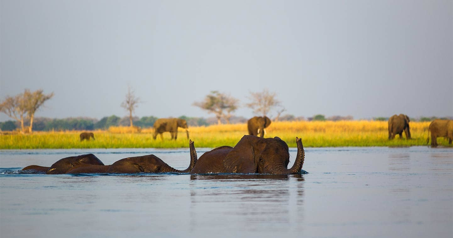 See Elephants Up Close in the Lower Zambezi National Park