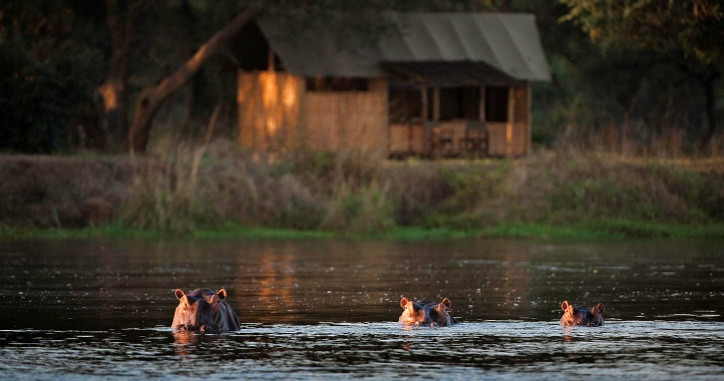 Enjoy the Lower Zambezi Wildlife Up Close at Old Mondoro Bush Camp