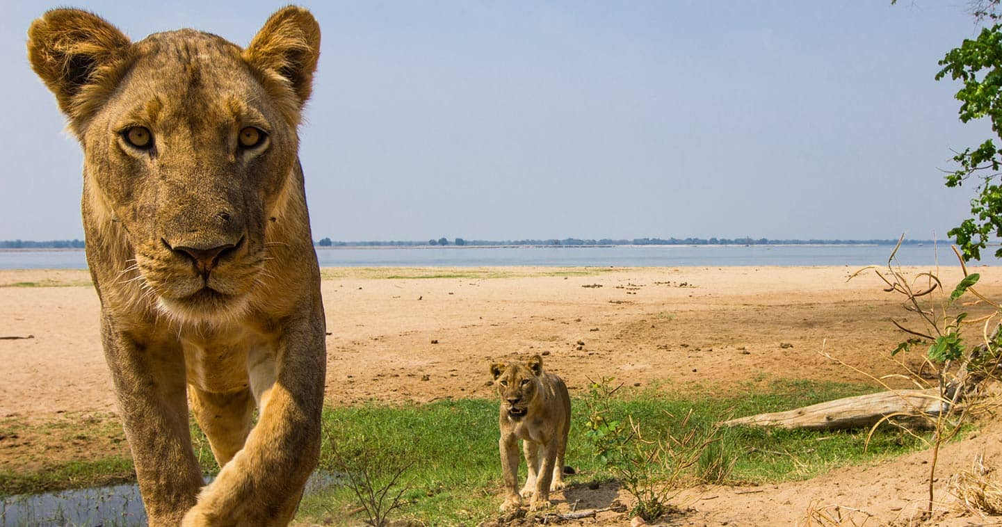 Enjoy the Lower Zambezi Wildlife Up Close
