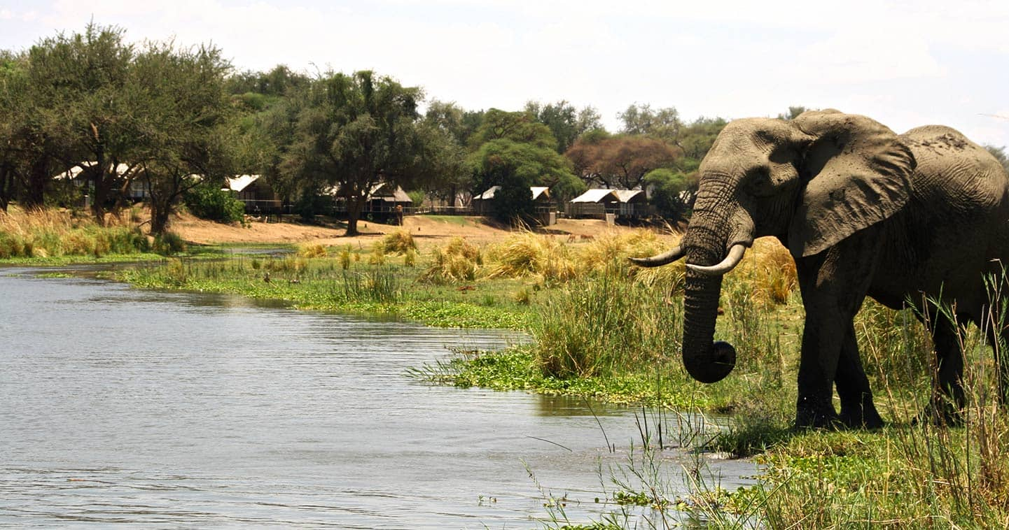 Enjoy the Lower Zambezi Wildlife Up Close at Anabezi Camp