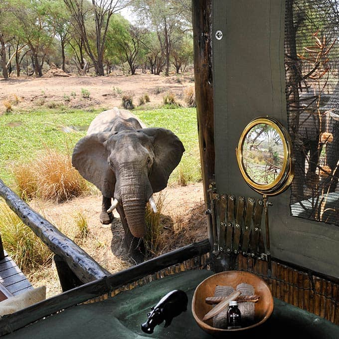 Stay at Old Mondoro Bush Camp in Lower Zambezi National Park for a true Safari Experience!