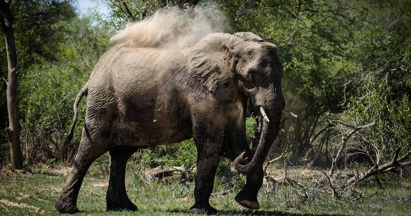 Elephant up close and personal in Lower Zambezi, the ideal place for a Big Five safari