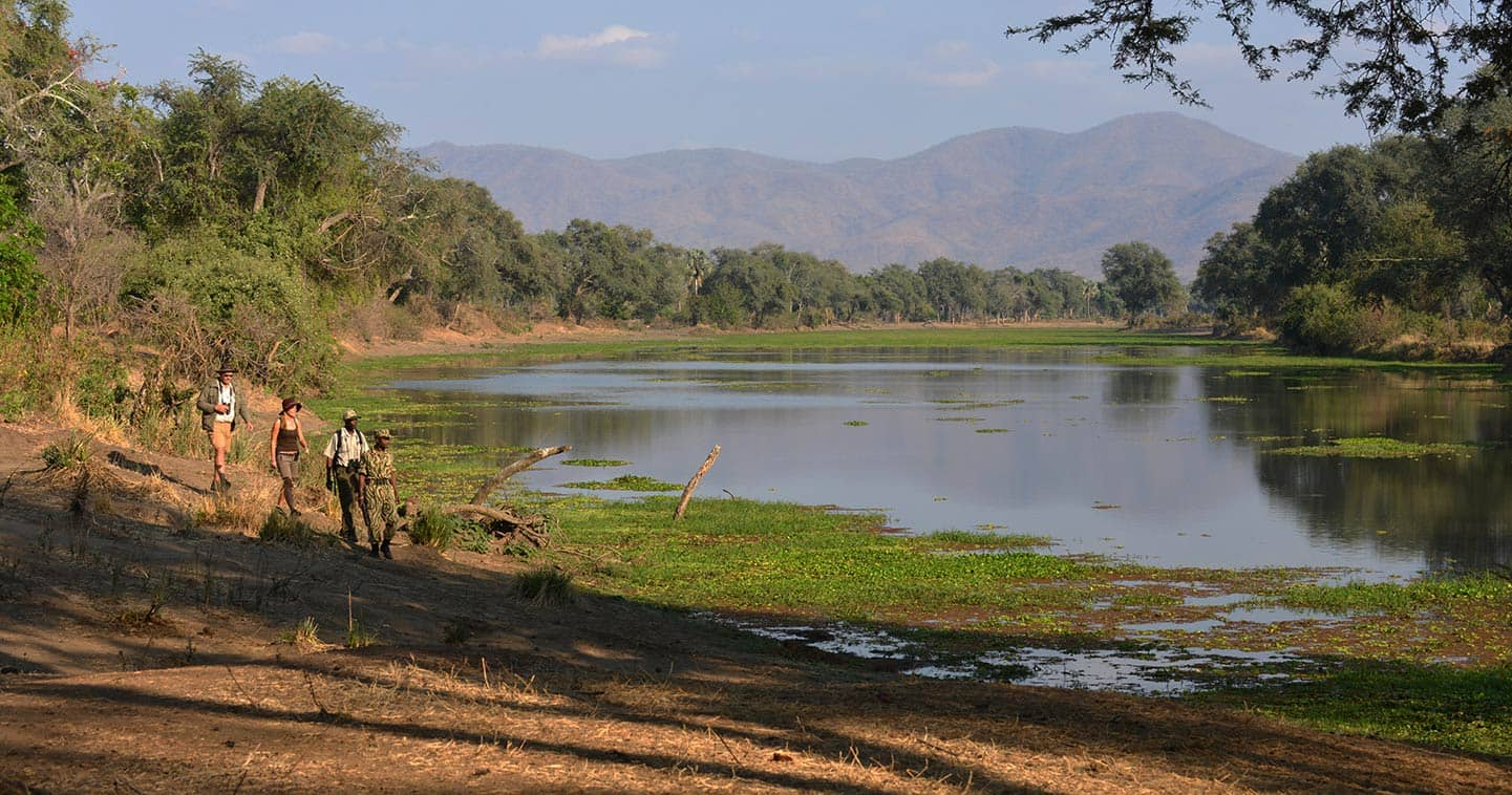 Explore the Lower Zambezi National Park on a Game Walk when Staying at Sausage Tree Camp