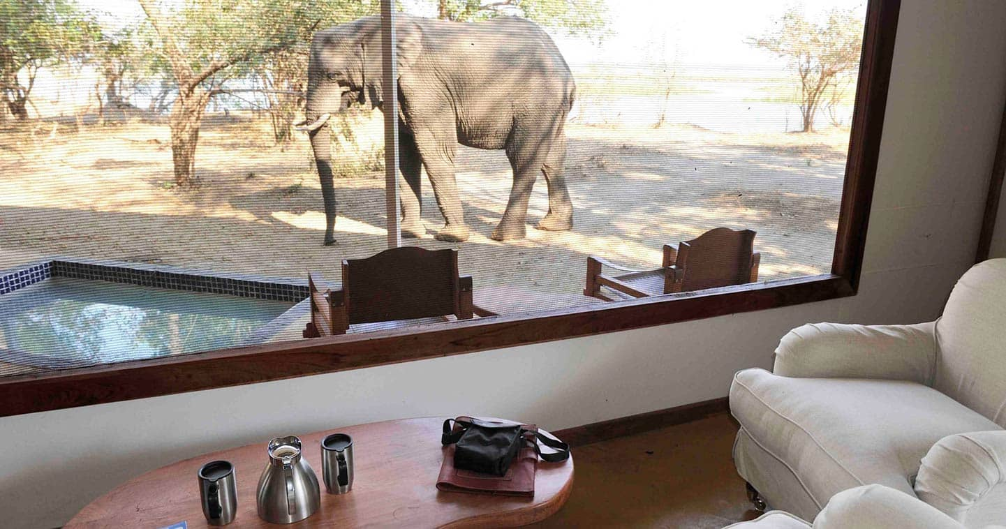 Up close with Wildlife During your stay at Potato Bush Camp in Zambia